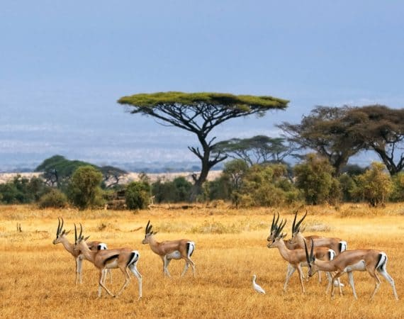 My Top 5 Amazing African Countries